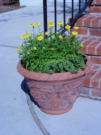 Golden Strawflower (Xerochrysum Bracteatum) With Ground Cover Growing In A  Floating Island Planter. Photo: Dick Schuck, Maryland Aquatic Nurseries Inc.